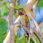 Hummingbird Feeders in the patio area