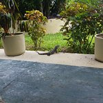 Some of the beautiful grounds with a little Iguana visitor.