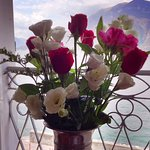 the Casa Stacy Hideaway flowers in the window