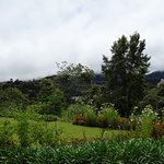 Cameron Highlands Trail No. 3 Foto