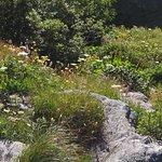 Wiese oberhalb (im Chiusella-Tal)