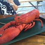 1.6 Pound Lobster