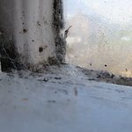Cobwebs on window