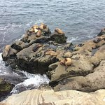 Seals at the cove