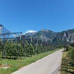 Pista ciclabile della Valsugana : pedalando tra i meleti