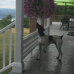 Photo de The Fox and the Grapes Bed and Breakfast