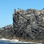 Photo de Deception Pass Tours