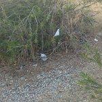 Imbarazzante stato di abbandono, mancanza assoluta di manutenzione e pulizia. Nella vegetazione