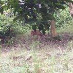 Foto de Chitwan Jungle Safari