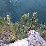 Olive Trail Foto