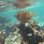 Foto di The Reef Marina
