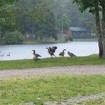 Foto Deer Run RV Resort