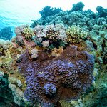Reef with blue coral
