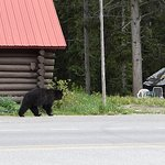 Across the street. Bear roaming the town. Toby scared it away.