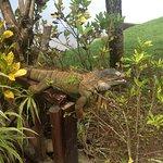 Foto di Tortuga Lodge & Gardens
