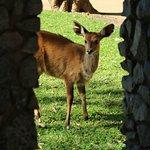 Photo of Imbali Safari Lodge
