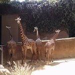 One Giraffe that wasn't camera shy...