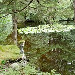 Pearson's Pond