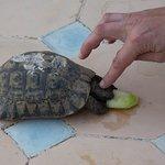 partage du petit déjeuner avec une des tortues