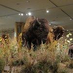 Draper Natural History Museum Foto