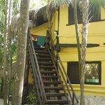 Treetop and Garden Suites
