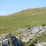 Vue du charmant som, dans le massif de la Chartreuse.