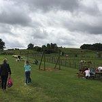 Foto di Down at the Farm
