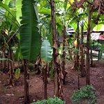 Foto de Palm Grove Service Villa