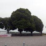 La plateforme devant le restaurant et l'estuaire de la Gironde derrière les arbres