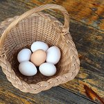 Farm fresh eggs provided for you, pick your own eggs, delicious!