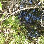Anhinga Trail Foto
