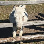 R Lazy S Ranch Foto