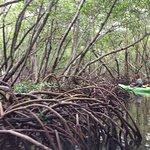 Photo de Sea Life Kayak Adventures