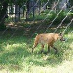 Foto de Beardsley Zoo