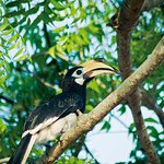 Friendly Hornbills