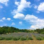 Photo de Agriturismo Boccapane