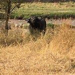 Photo de Singita Mara River Tented Camp