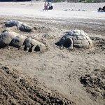 Photo of Sandbanks Beach Resort