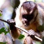Araras Pantanal Ecolodge Foto