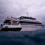 Pro Dive Cairns Day Trips Foto