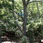 Stain glass in tree
