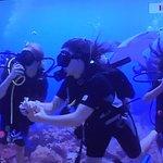 Photo of Roatan Shark Dive