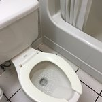 Not even a toilet lid!
