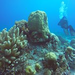 Corals - this place is full of beauty