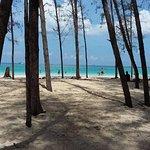 Bamboo Island Foto