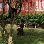 Apartamentos THe Koala Garden Suites Foto