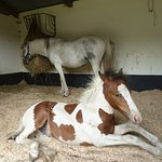 Four month old foal and his Mum - both rescued & now living at Hillside Animal Sanctuary West Ru