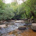 The river running alongside Badger's Holt