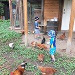 Bieri's Paradise Guest Farm Foto