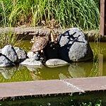 La rana del estanque